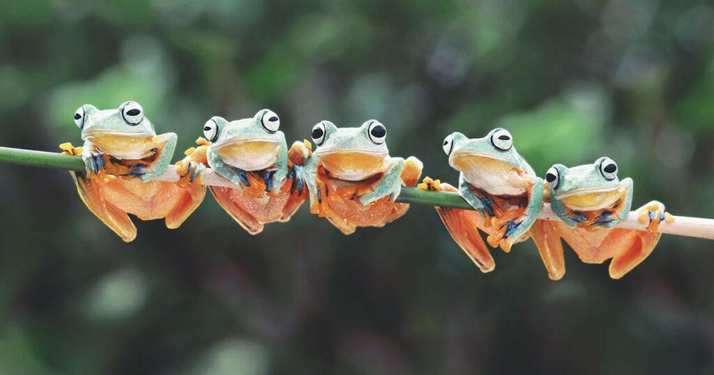 analisi sito web gratis con Screaming Frog