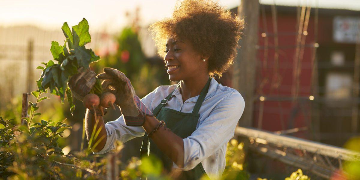 alimentazione sostenibile, naturale ed equa nel tuo ristorante