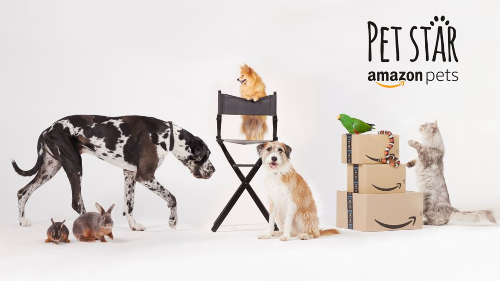 immagine del concorso pet star di Amazon Pets